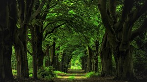 Canopy Dirt Road Forest Green Path Tree 2000x1313 Wallpaper
