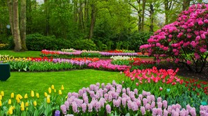 Blossom Colorful Flower Hyacinth Park Spring Tulip 4272x2848 Wallpaper