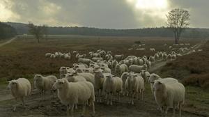 Herd 2047x1356 wallpaper