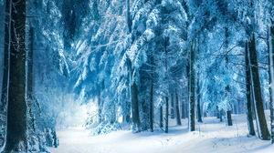 Earth Winter 1920x1200 Wallpaper