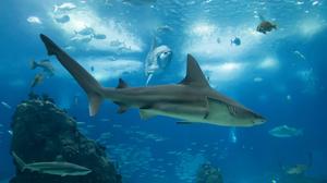 Fish Sea Life Underwater Predator Animal 3960x2640 Wallpaper