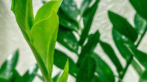 Green Plants 2071x4032 Wallpaper