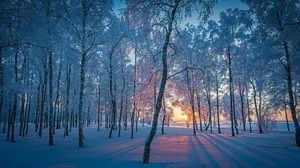 Forest Nature Snow Sunrise Winter 2047x1102 wallpaper
