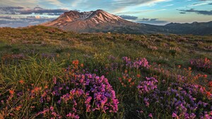 Earth Flower Landscape Mount St Helens National Volcanic Monument Pink Flower Volcano 5250x3500 Wallpaper
