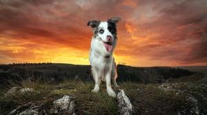 Border Collie Cloud Dog Landscape Pet Sunset 2048x1259 Wallpaper