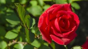Macro Petal Red Rose Rose 2048x1281 Wallpaper
