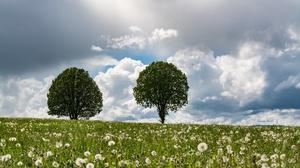 Cloud Dandelion Field Nature Sky Summer Tree 6000x3375 Wallpaper