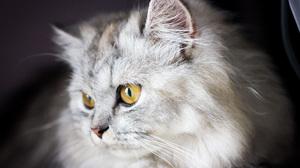 Cat 5184x3456 wallpaper