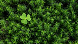 Clover Green Photography 1920x1080 Wallpaper