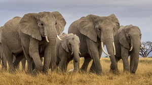 Baby Animal Elephant Wildlife 1920x1200 Wallpaper