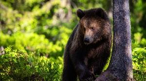 Animal Bear 4392x2928 Wallpaper