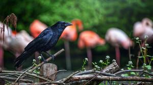 Bird Blur Crow 2048x1367 Wallpaper