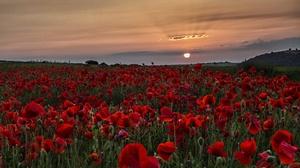 Sunset Nature Red Flower Summer 3840x2670 wallpaper