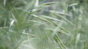 Plant 4320x3240 Wallpaper