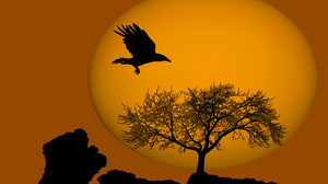 Halloween Holiday Moon Raven Silhouette Tree Orange Color 1920x1200 Wallpaper