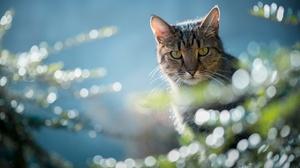 Bokeh Cat Pet Stare 2048x1256 Wallpaper