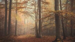 Forest 4896x3264 Wallpaper