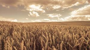 Field Summer Wheat 3840x2160 Wallpaper