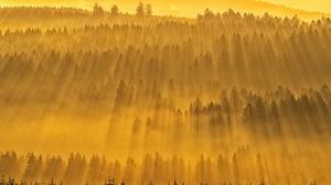 Forest Fog 2000x1335 wallpaper