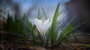 Flower White Flower Dew Water Drop 5616x3744 wallpaper