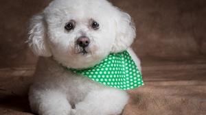 Dog Cute Fluffy Pet 2048x1365 Wallpaper