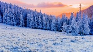 Winter Fir Nature Landscape Hills Mountains Sunset Snow Sky Forest Trees White Cold Sun Mist Sunligh 5000x3337 Wallpaper