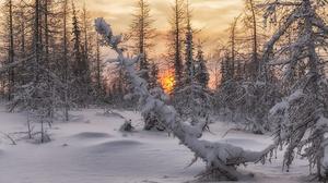 Forest Sun Snow Sunset Fir Tree 2000x1333 Wallpaper