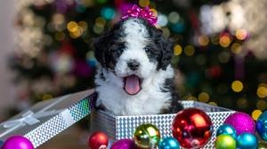 Baby Animal Christmas Ornaments Dog Pet Puppy 5120x3406 Wallpaper