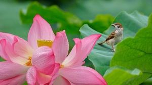 Flower Bird Lotus 5697x3798 Wallpaper