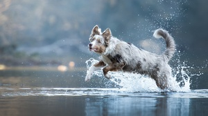 Dog Animals Mammals Outdoors Water In Water Jumping Nature 2048x1366 Wallpaper