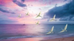 Beach Bird Flying Heron Sea Sunset 4000x3000 Wallpaper