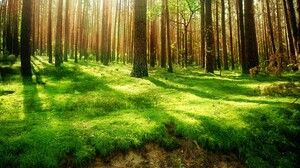 Earth Forest 1920x1080 Wallpaper