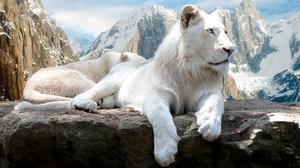 Animal Lion 1920x1200 wallpaper