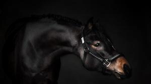 Animal Horse 2048x1176 Wallpaper