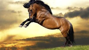 Horse 2880x1800 wallpaper