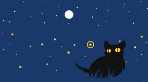 Cat 2560x1440 Wallpaper