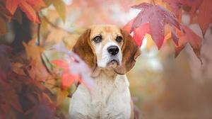 Pet Dog 2047x1325 wallpaper