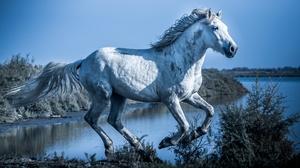 Horse 2880x1620 wallpaper