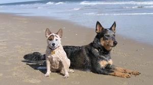 Beach Dog Puppy Pet 2560x1600 Wallpaper