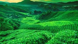 Greenery Hill Tea Plantation Valley 2128x1409 Wallpaper