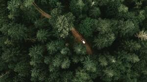 Trees Green Nature Forest 3936x2214 wallpaper