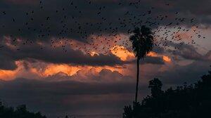 Landscape Portrait Display Vertical Nature Clouds Birds Palm Trees Sky Path 1638x2048 Wallpaper