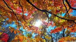 Branch Fall Leaf Nature Sunshine 2560x1440 wallpaper