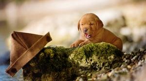 Baby Animal Blur Dog Labrador Retriever Pet Puppy 2048x1365 Wallpaper