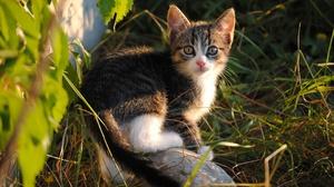Grass Kitten Stone Pet 2560x1714 Wallpaper