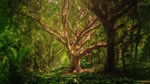 Plant Tree 5760x3840 wallpaper
