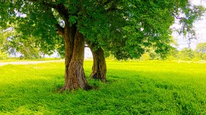 Sri Lanka Nature Rice Paddy Road Trees Photography Green 4032x3024 Wallpaper