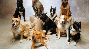 Animal Dog 1600x1200 Wallpaper