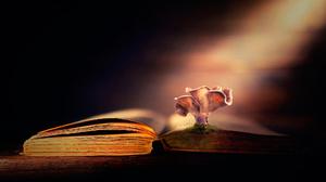 Artistic Book Mushroom Sunbeam 2000x1333 Wallpaper
