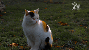 Animals Nature Cats Calico 6000x3376 Wallpaper